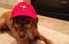 Photos: Meet the Top 10 Cutest Redbird Pets article thumbnail