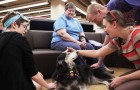 Video: PAWSitively Stress Free dogs give students a break article thumbnail