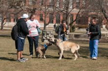 Students walk a dog on the Quad
