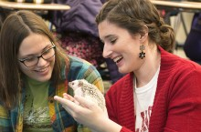 Students play with hedgehog