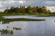 image of The Barba Azul Nature Reserve includes wetland, savannah and palm forest