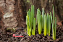 flowers coming up out of the ground