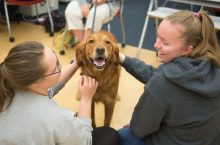 Students pet therapy dog