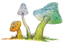 Mushrooms children's literature