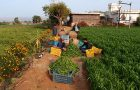 Irrigation in India topic of Geography Awareness Week speaker, November 15 article thumbnail