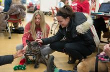 Illinois State students pet a certified therapy dog during PAWSitively Stress Free at Milner Library.