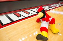 Reggie Redbird on basketball court
