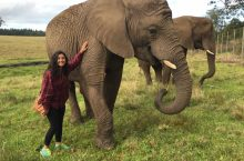 Student studying in South Africa poses next to an elephant.