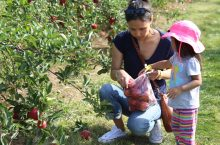 family picking apples