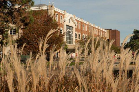 A close up of wispy, wheat-like foliage with Schroeder Hall standing stately in the background.