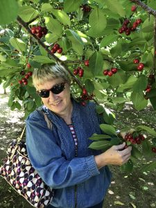 Nancy Lind, wearing sunglasses and picking cherries off of a cherry tree.