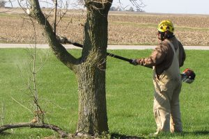 ISU Grounds crew sharpening their chainsaws and tree removal skills article thumbnail