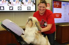 therapy dog getting chair massage