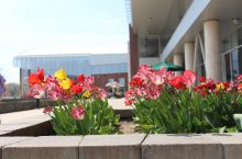 FLowers outside Student Fitness Center