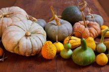 various gourds on a table