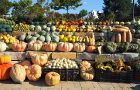 various gourds stacked in rows