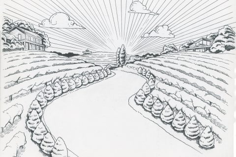 Drawing of a wine trail