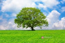 Tree in a beautiful meadow