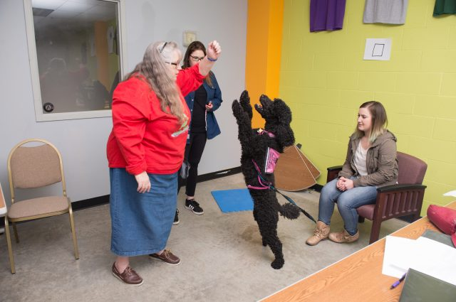 Every dog has its day: Canine behavioral lab rehabilitates dogs for compassion and research article thumbnail
