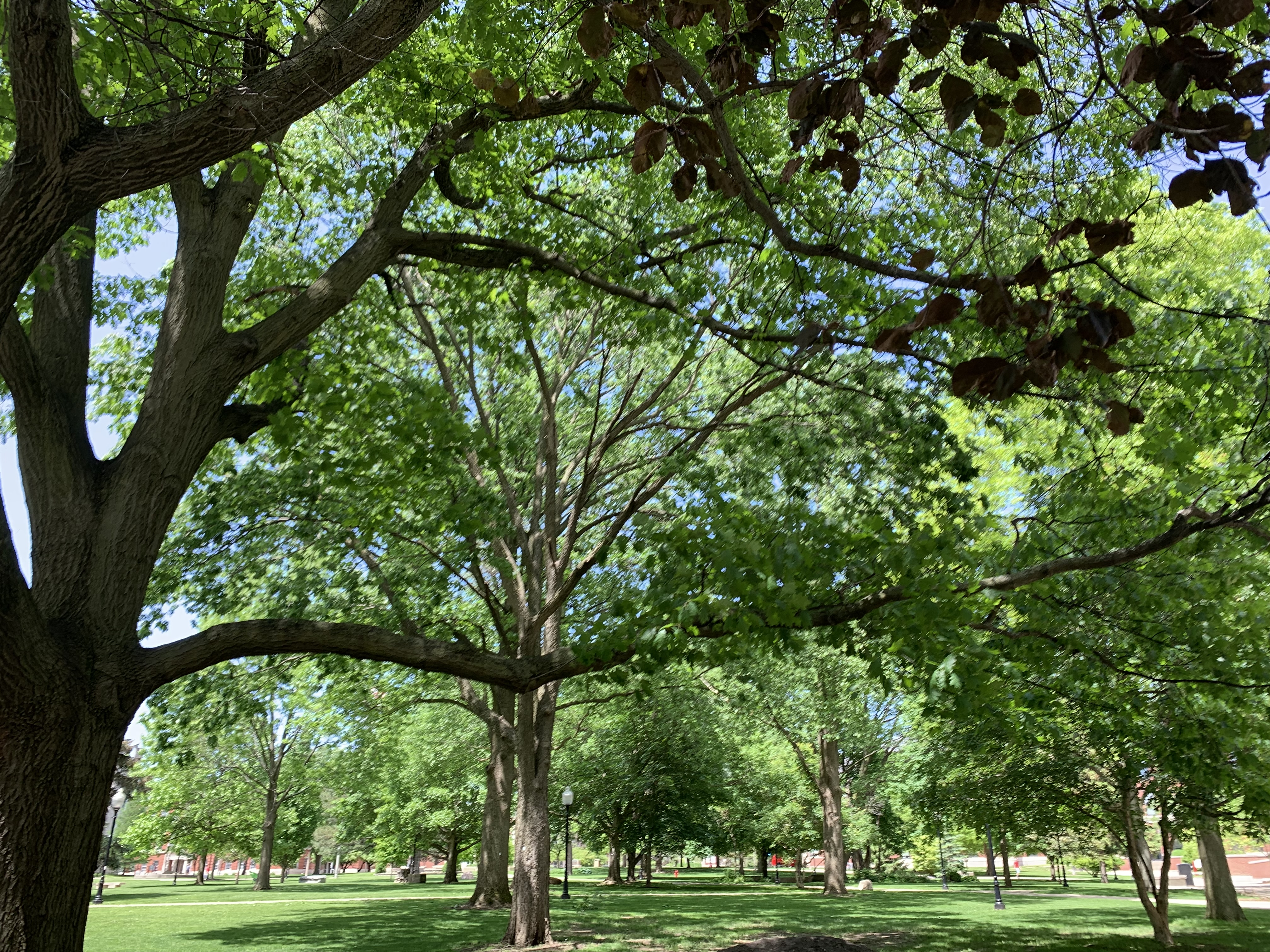 First Fell Arboretum map now available - News - Illinois State on