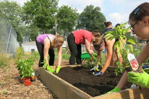 Fellows plant new seeds in a garden in Albany Park.