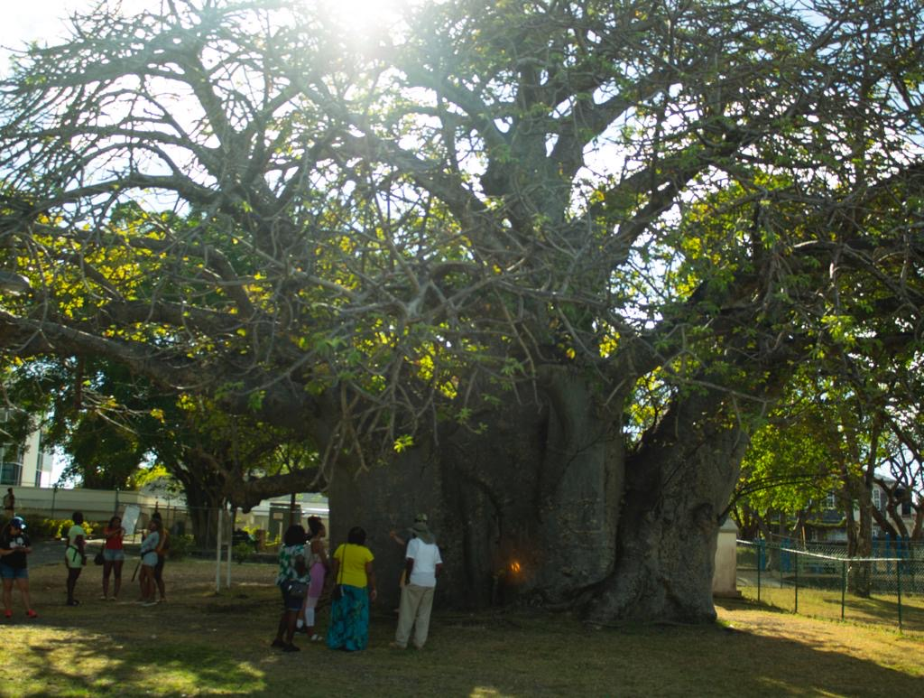 Large tree with people underneath