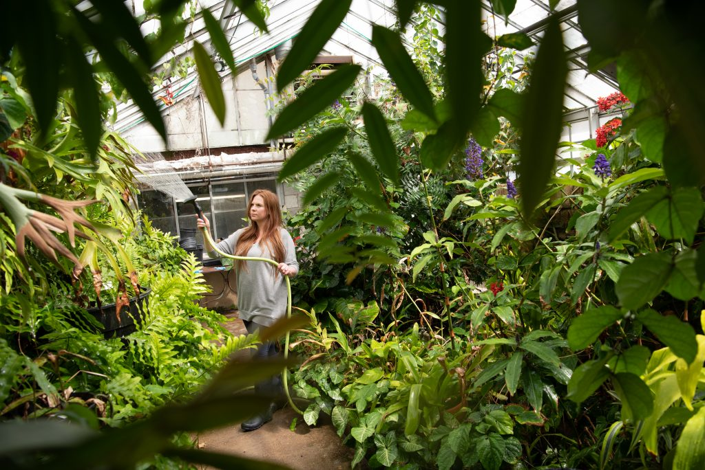 Woman waters plant in greenhouse