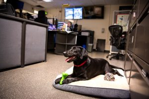 Sage at home in the ISUPD police station