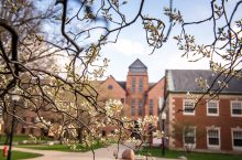 a photo of tree branches in front of McCormick Hall